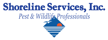 Pest Control, Wildlife, Exterminator, Holland Michigan